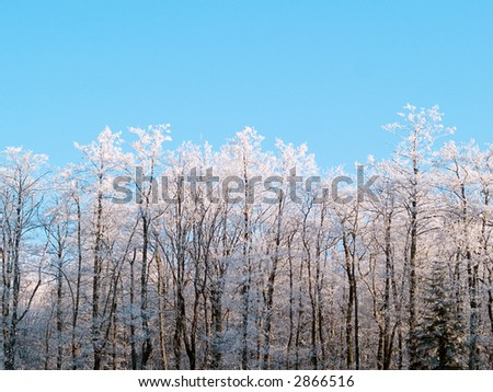 Trees in hoarfrost - stock photo
