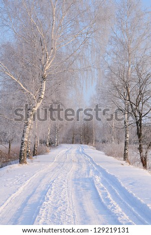 Trees in hoarfrost along winter country road