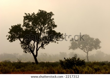 Trees in mist, early morning, Kruger National Park, South Africa - stock photo