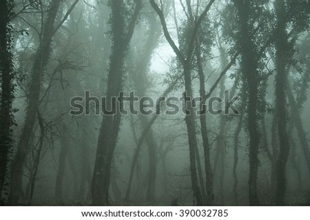 trees in misty forest