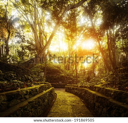 Trees in Monkey Forest in the city of Ubud. Bali, Indonesia - stock photo