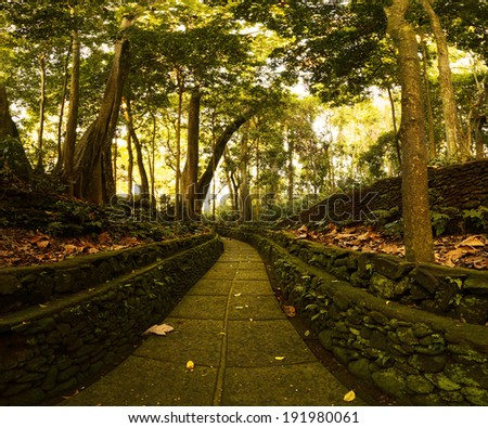 Trees in Monkey Forest sanctuary in the city of Ubud. Bali, Indonesia - stock photo