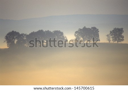 Trees in morning fog over Scenic Highway US Route 219, WV - stock photo