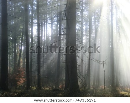 trees in morning mist