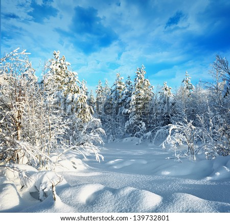 Trees in northern forest covered with hoarfrost and snow - stock photo