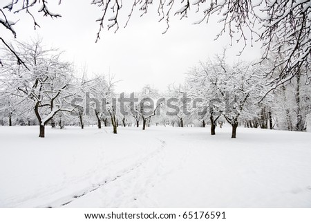 Trees in park covered by snow in winter day - stock photo