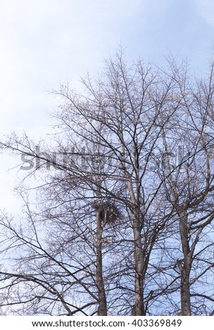 trees in park with a crow nest. Spring, bare trees. - stock photo