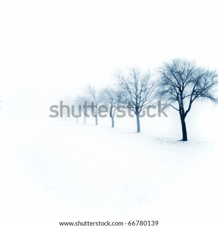Trees in snow - stock photo