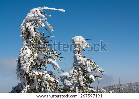 trees in snow during wind, mountain view in Moravian Wallachia, skiing resort and area, natural park, Czech republic - stock photo