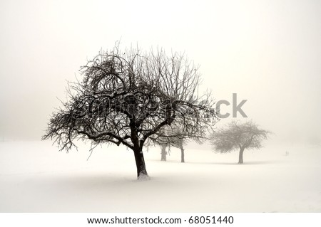 Trees in snow on fog during winter - stock photo