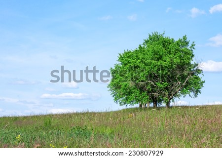 Trees in Summer - stock photo
