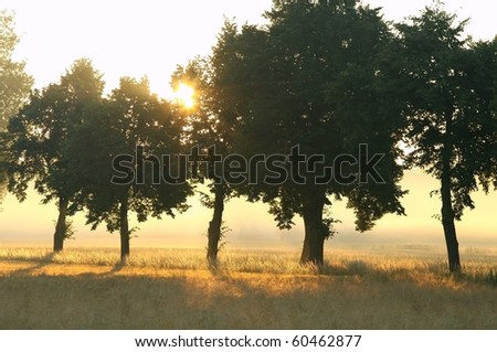 Trees in the countryside lit by the rays of the sun on a foggy summer morning. - stock photo