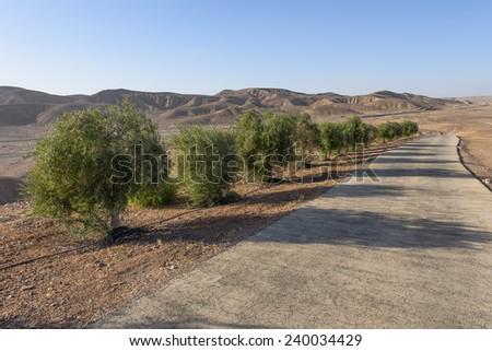 Trees in The Desert - stock photo