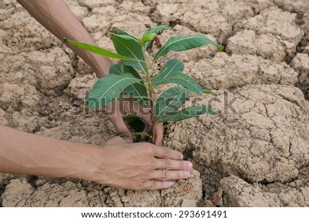 Trees in the Dry Areas - stock photo