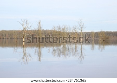 Trees in the flooded field - stock photo