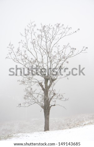 trees in the fog in a winter day