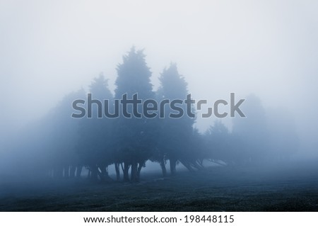trees in the fog with vintage filter effect - stock photo