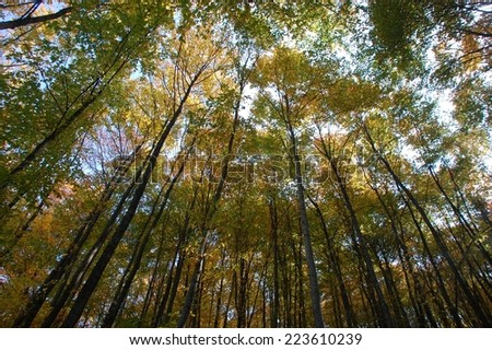 trees in the forest - stock photo
