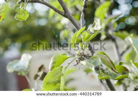 how to kill ants in fruit trees