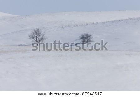 Trees in the hills Saskatchewan Canada cold winter snow freezing - stock photo