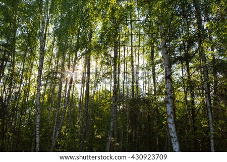 Trees in the Kampinos National Park, Warsaw, Poland