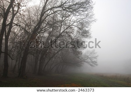 Trees in the mist in the woods