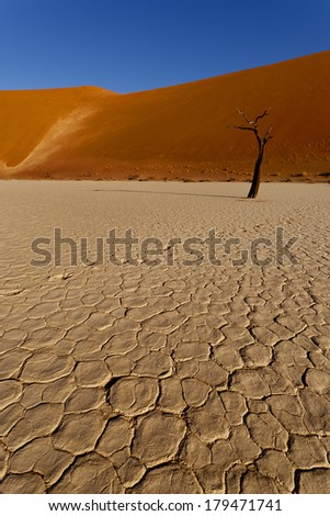 trees in the namib desert - stock photo