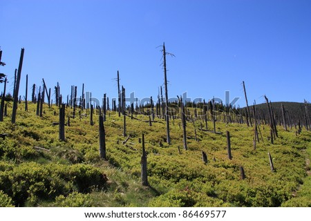 Trees in the Polish mountains destroyed by acid rain. - stock photo