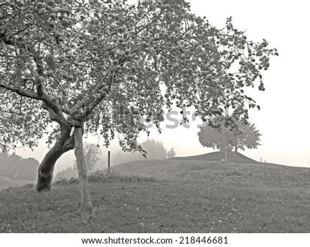 Trees in the rural landscape of Styria.  - stock photo
