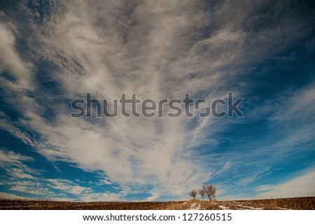 trees in the sky , landscape , images