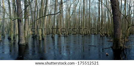 Trees in the swamp, panorama, ice crust - stock photo
