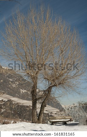 Trees in the Swiss Alps