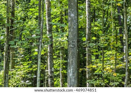 trees in the wild forest gives a harmonic pattern