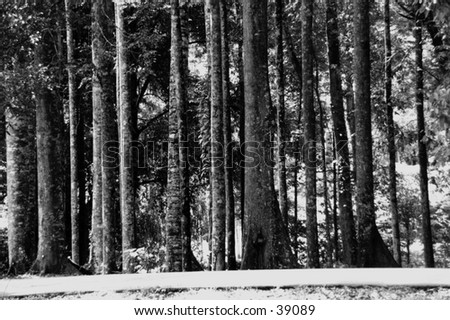 Trees in vertical lines