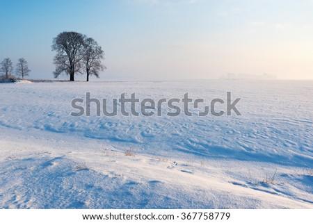 Trees in winter . - stock photo