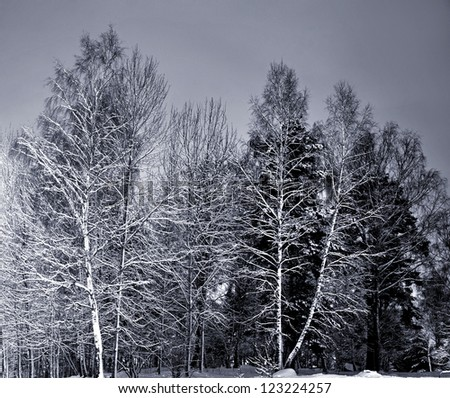 Trees in winter night with grey sky
