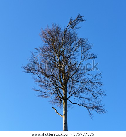 Trees in winter-spring time without leafs - stock photo