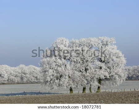 Trees in winter wonderland - stock photo