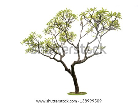 Trees isolated - stock photo