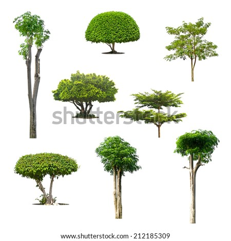 Trees isolated on a white background. - stock photo