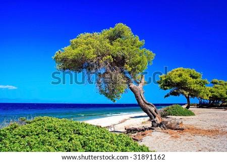 Trees isolated on blue sky - stock photo