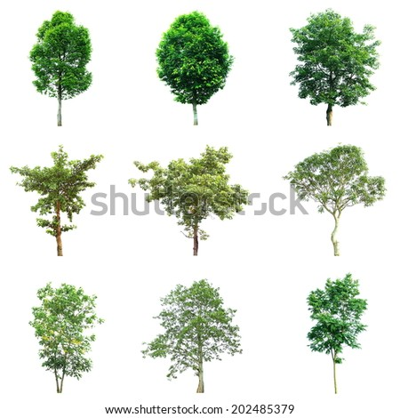 Trees isolated on white Background - stock photo