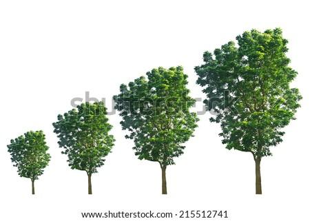 Trees isolated on white background - stock photo