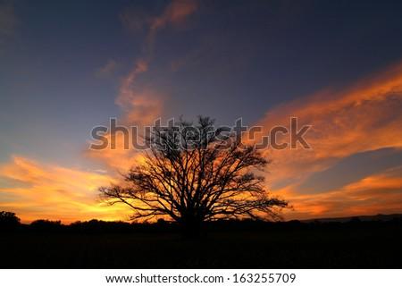 Trees longer life. Death at sunset. - stock photo