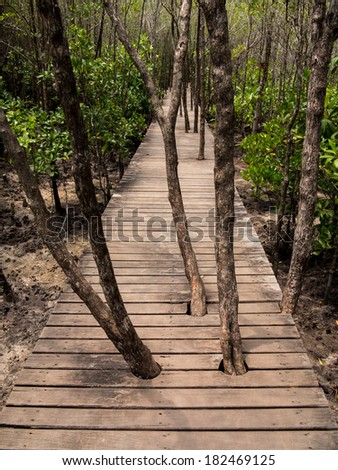 Trees Mangrove forest Growth On Boardwalk way, Thailand - stock photo