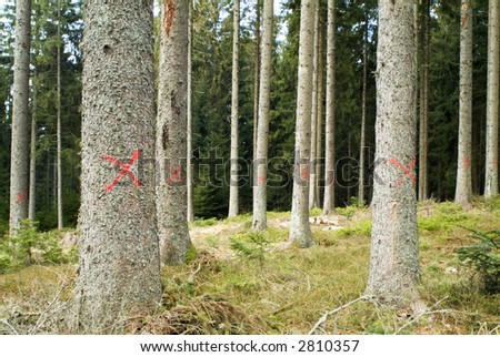 trees marked to chop - stock photo