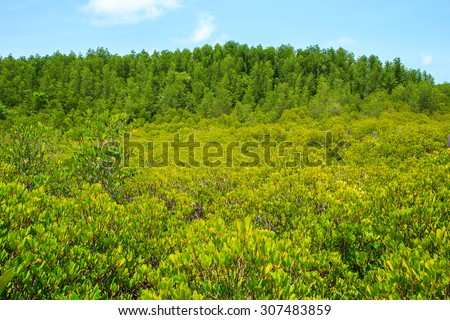 Trees natural tropical forests in Thailand. - stock photo