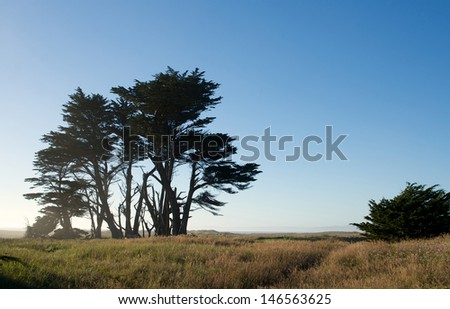 Trees near the coast in Northern California - stock photo