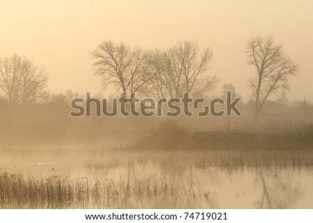 Trees near the pond on a foggy early spring morning. - stock photo