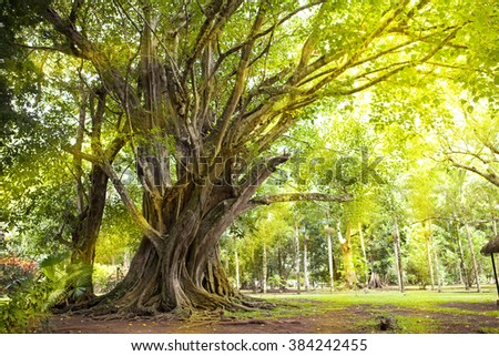 Trees of tropical climate.  Mauritius - stock photo